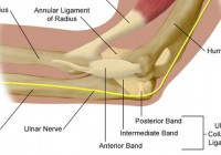 How Pitchers Tear the Ulnar Collateral Ligament